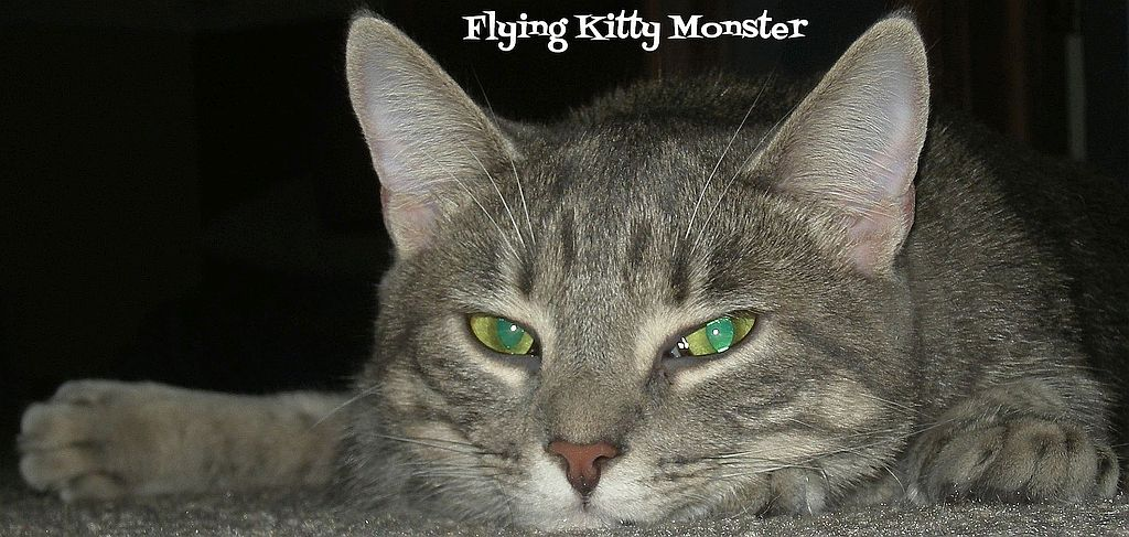 title: Flying Kitty Monster, photo of a cat, looking at the camera